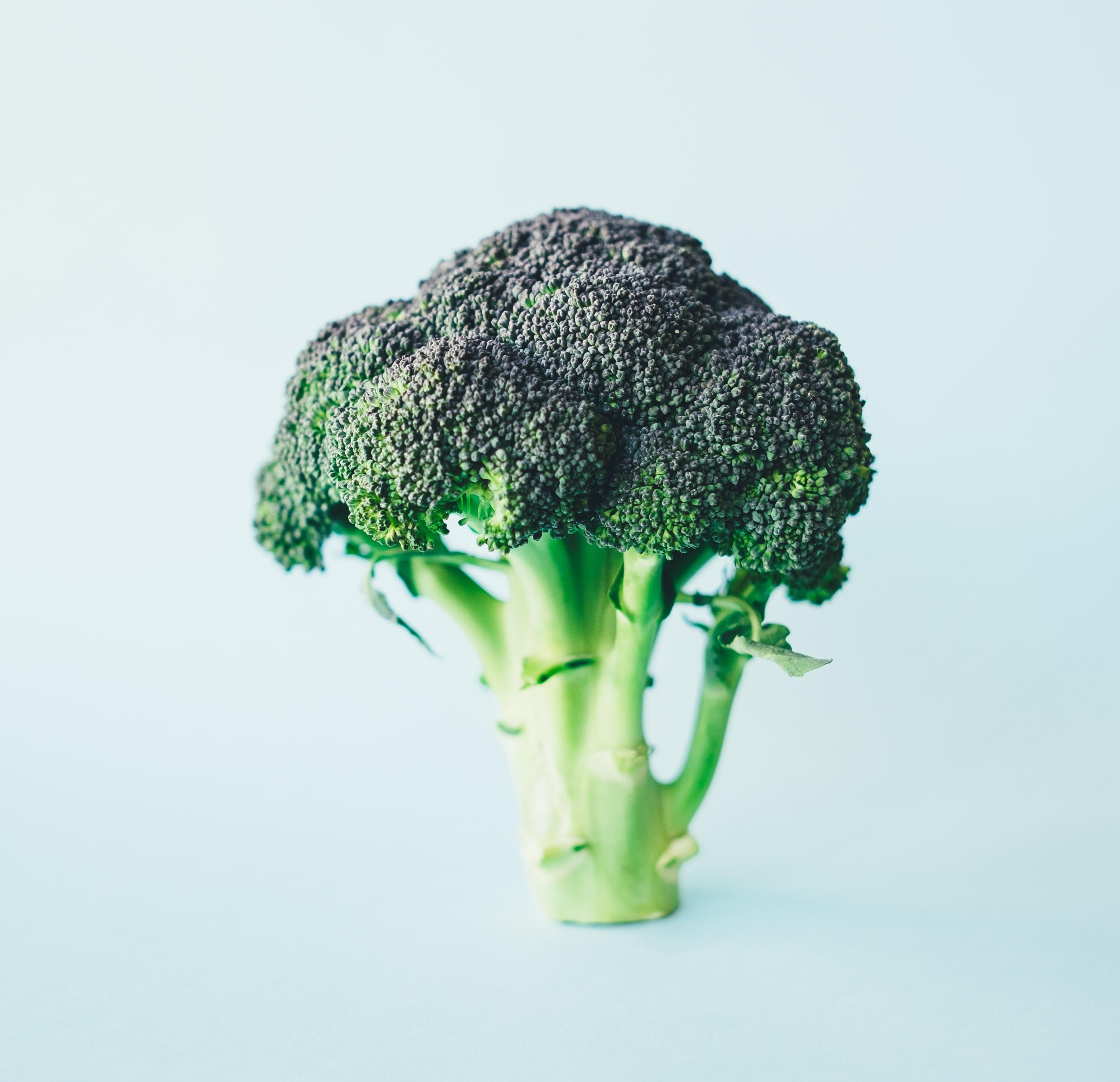 Eat broccoli it's healthy for you!